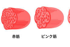 NSCA対策 〜生理学〜